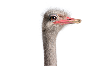 ostrich-image-resources